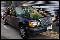 Plants growing out of Mercedes car, Bergamot Station. Santa Monica, Los Angeles, California, USA ( color)