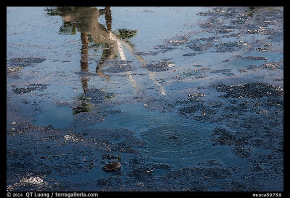 Tar pit with reflections of Mastodon, La Brea. Los Angeles, California, USA (color)