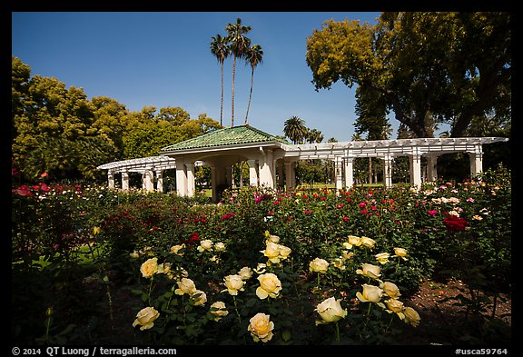 Rose Garden. Pasadena, Los Angeles, California, USA (color)