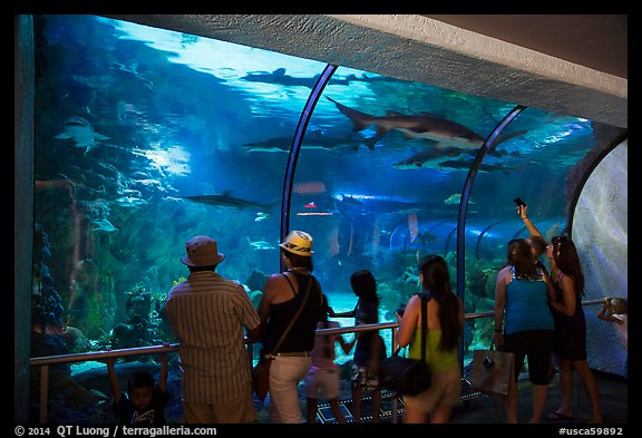 Visitors looking through shark tunnel, Seaworld. SeaWorld San Diego, California, USA (color)
