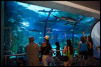 Visitors looking through shark tunnel, Seaworld. SeaWorld San Diego, California, USA ( color)