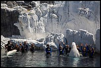 Visitors interact with beluga whales. SeaWorld San Diego, California, USA ( color)