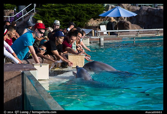 Guests petting dolphins. SeaWorld San Diego, California, USA (color)