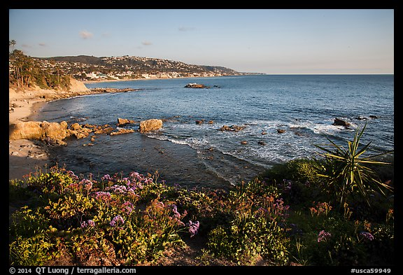 High bluff with flowers overlooking coastline in late afternoon. Laguna Beach, Orange County, California, USA (color)