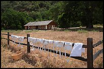 Laundry drying on fence, Fort Tejon state historic park. California, USA ( color)