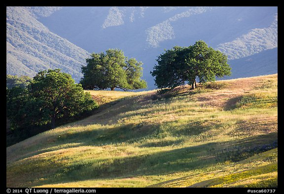 Oaks and hills, Temblor Range. California, USA (color)