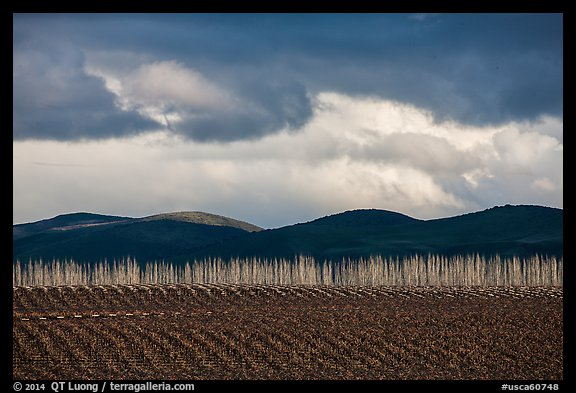 Field, bare trees, hills, and clouds. California, USA (color)