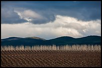 Field, bare trees, hills, and clouds. California, USA ( color)