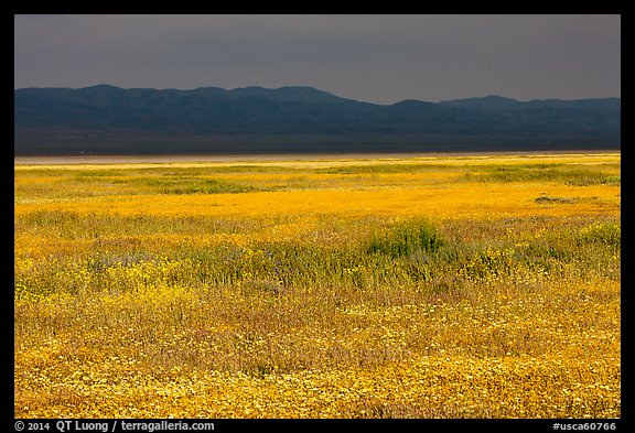 Wildflowers, Temblor Range and dark sky. Carrizo Plain National Monument, California, USA (color)