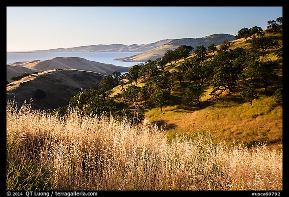 Grasses, oaks, and hills above San Luis Reservoir. California, USA (color)