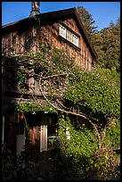 Climbing plants, Big Sur Inn. Big Sur, California, USA ( color)