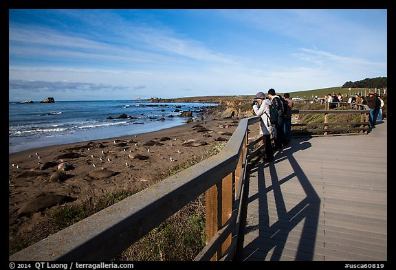 Visitors observe Piedras Blancas seal rookery from boardwalk. California, USA (color)