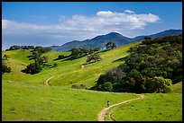 Trail winding on verdant hills, Pacheco State Park. California, USA ( color)