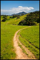 Trail and luch hills, Pacheco State Park. California, USA ( color)