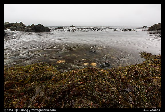 Seaweed and ocean, Jade Cove. Big Sur, California, USA (color)