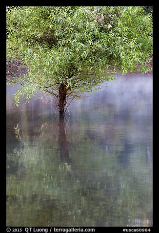 Tree rising out of water, Jenkinson Lake, Pollock Pines. California, USA (color)