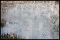 Grasses, mist floating above water, Jenkinson Lake. California, USA ( color)