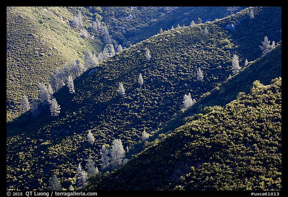 Hills and trees, Merced River Canyon. California, USA (color)