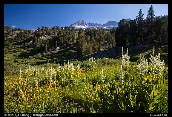 Meadows, trees, and Sierra Nevada crest, Twenty Lakes Basin. California, USA (color)