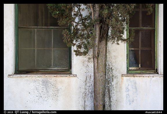 Old windows and tree, La Paz, Cesar Chavez National Monument, Keene. California, USA (color)