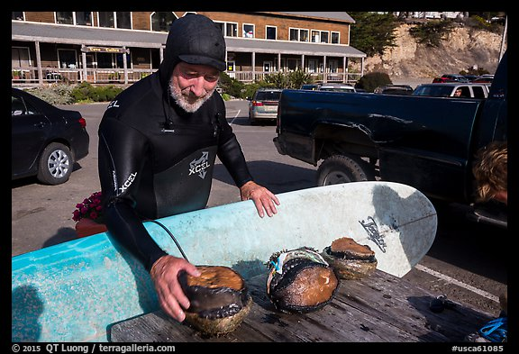 Man with surfboard examining abalone. California, USA (color)