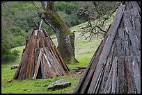 Reconstructed Miwok village, Olompali State Historic Park. Petaluma, California, USA ( color)