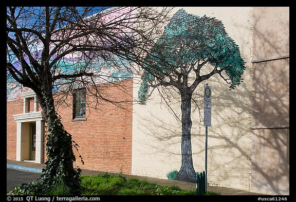 Tree and mural, Willits. Sonoma Valley, California, USA (color)