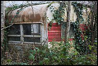 Overgrown trailer, Klamath. California, USA ( color)