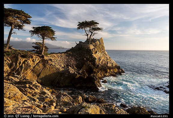 Monterey cypress on granite cliff. Pebble Beach, California, USA (color)