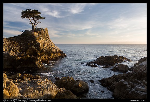 Lone Cypress, and cove, late afternoon. Pebble Beach, California, USA (color)