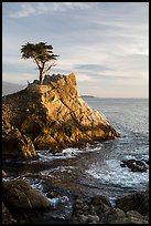 Lone Cypress. Pebble Beach, California, USA ( color)