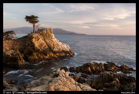 Salt-pruned Monterey cypress (macrocarpa) tree. Pebble Beach, California, USA (color)