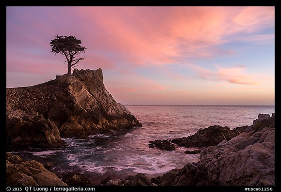 Lone Cypress and cove at sunset. Pebble Beach, California, USA (color)
