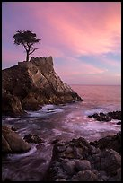 Lone Cypress and cloud painted by sunset. Pebble Beach, California, USA ( color)