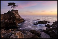 Lone Cypress clinging to its wave-lashed granite pedestal. Pebble Beach, California, USA ( color)