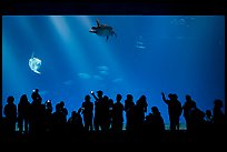 Tourists crowd outer ocean exhibit, Monterey Bay Aquarium. Monterey, California, USA ( color)