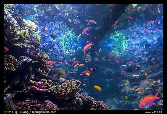 Tropical aquarium, Monterey Bay Aquarium. Monterey, California, USA (color)