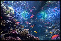 Tropical aquarium, Monterey Bay Aquarium. Monterey, California, USA ( color)