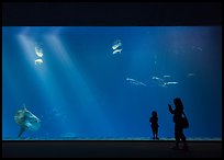Mother and girl in front of huge fish tank, Monterey Bay Aquarium. Monterey, California, USA ( color)
