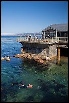 Ocean deck and scuba divers, Monterey Bay Aquarium. Monterey, California, USA ( color)
