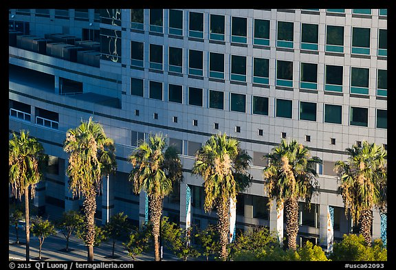 Palm trees, and Adobe building from above. San Jose, California, USA (color)