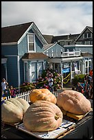 Giant pumpkins and houses. Half Moon Bay, California, USA ( color)