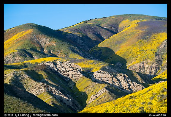 Temblor Range hills with wildflowers. Carrizo Plain National Monument, California, USA (color)