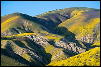 Temblor Range hills with wildflowers. Carrizo Plain National Monument, California, USA ( color)