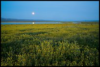Spring wildflowers and moon reflected in pond. Carrizo Plain National Monument, California, USA ( color)
