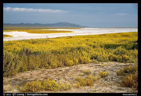Wildflowers and salt bed bordering Soda Lake. Carrizo Plain National Monument, California, USA (color)