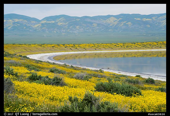 Yellow wildflowers, pond, Temblor Range. Carrizo Plain National Monument, California, USA (color)