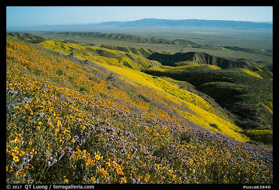 San Joaquin blazing stars and phacelia on Temblor Range hills above valley. Carrizo Plain National Monument, California, USA (color)