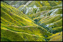 Ridges in springtime. Carrizo Plain National Monument, California, USA ( color)