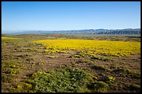 Aerial view of Carrizo Plain in springtime. Carrizo Plain National Monument, California, USA ( color)